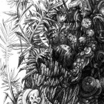 Costa Rica Jungle Drawing 1