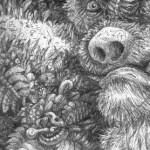 """Costa Rican Jungle- """"Dead Sloth"""""""